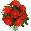 Valentines Flowers to Delhi: Valentines Day Flowers to Delhi