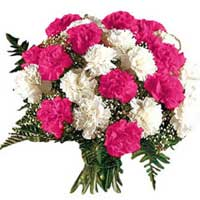 Flower Delivery Delhi : Pink White Carnations
