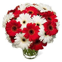 Valentine's Day Flowers to Delhi : Red White Gerbera