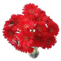 Flowers to Delhi : Anniversary Flowers to Delhi : Red Gerbera Bouquet