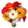 Flowers to Delhi : Fathers Day Flowers to Delhi : Send Flowers to Delhi