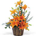 Send Flowers to Delhi : Flowers to Delhi : Lily Basket
