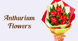 Send Flowers to Delhi Same Day
