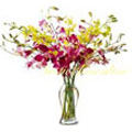 Send Flowers to Delhi : New Born Flowers to Delhi