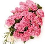 Домашние цветы с толстыми бордовыми