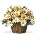 Flowers to Delhi, Send Valentines Day Flowers to Delhi