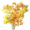 Send Flowers to Delhi : Orchid Flowers to Delhi