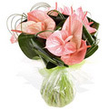 Flowers to Delhi : Send Anthurium Flowers to Delhi